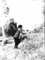 1984 р. сінокос