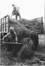 1984 р. сінокос Безвесільний і К.Костенець